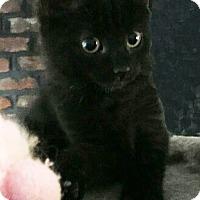 Adopt A Pet :: Spree - N. Billerica, MA