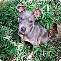 Adopt A Pet :: Pal - Seabrook, NH