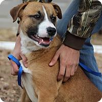 Adopt A Pet :: Phoenix **PENDING ADOPTION** - Columbia, TN