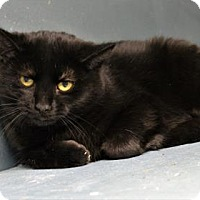 Adopt A Pet :: Ainsley - West Des Moines, IA