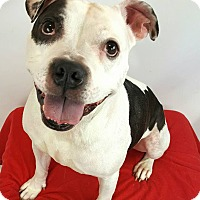 Adopt A Pet :: Squiggy - Toledo, OH