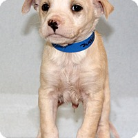 Adopt A Pet :: Stone - Waldorf, MD