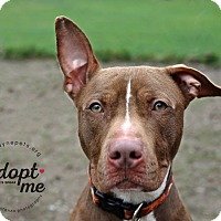 Adopt A Pet :: Duke - Lyons, NY