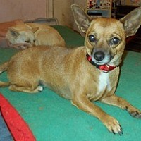 Adopt A Pet :: Natasha - Albany, OR