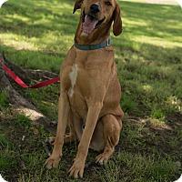 Adopt A Pet :: Sherwood - Muldrow, OK