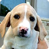 Adopt A Pet :: Sammy - white settlment, TX