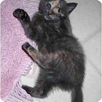 Adopt A Pet :: Darcey - Richmond, VA