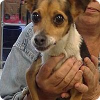 Adopt A Pet :: Popis - Chicago, IL