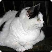 Adopt A Pet :: Chloe - New Port Richey, FL