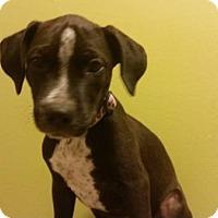 Adopt A Pet :: Ash - Scottsdale, AZ
