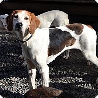 Adopt A Pet :: Butch - Bakersville, NC