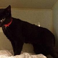 Adopt A Pet :: Darling - Iroquois, IL