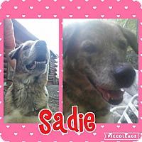 Adopt A Pet :: Sadie - Cranston, RI