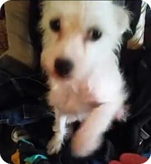 Terrier (Unknown Type, Small) Mix Dog for adoption in Lexington, North Carolina - Faith