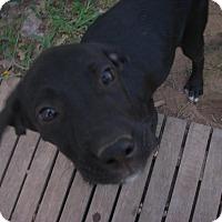 Adopt A Pet :: Shadow - Buchanan Dam, TX
