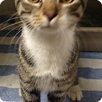 Adopt A Pet :: Vivor - Putnam Hall, FL