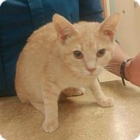 Adopt A Pet :: Lucas - Smithtown, NY