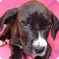 Adopt A Pet :: Bevi - Oxford, MS