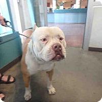 Adopt A Pet :: PEANUT - ID#A1690898 - Beverly Hills, CA