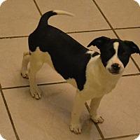 Adopt A Pet :: MooMOo - Patterson, NY