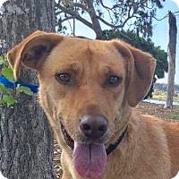 Adopt A Pet :: DORA - pasadena, CA