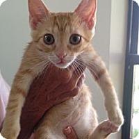 Adopt A Pet :: May - Naples, FL