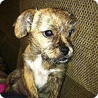 Adopt A Pet :: Layla - Garden Grove, CA