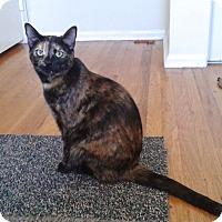 Adopt A Pet :: Sequoia - Colmar, PA