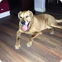 Adopt A Pet :: BUDDIE - Higley, AZ