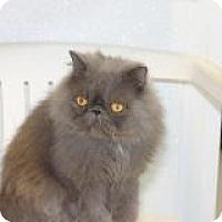 Adopt A Pet :: Max - El Cajon, CA