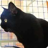 Adopt A Pet :: Maximilian - Davis, CA
