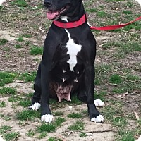 Adopt A Pet :: Mia - Hamburg, PA