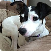 Adopt A Pet :: Stella - Marietta, GA
