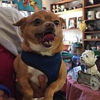 Adopt A Pet :: Jana - Grass Valley, CA