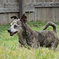 Adopt A Pet :: STEVE - Joplin, MO
