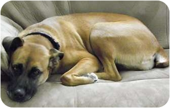Shepherd (Unknown Type) Mix Dog for adoption in Portsmouth, Rhode Island - Chloe- meet me!