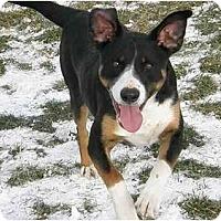 Adopt A Pet :: Grant - Meridian, ID
