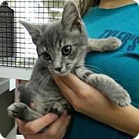 Adopt A Pet :: Tiajuana - Troy, OH