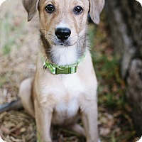 Adopt A Pet :: Magic - Austin, TX