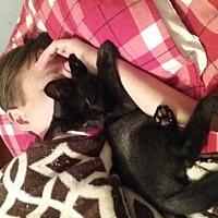 Adopt A Pet :: Ernie - Walnut Creek, CA