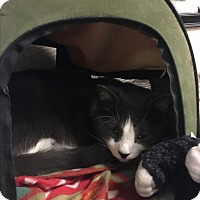 Adopt A Pet :: Marky Marc - Cleveland, OH