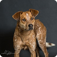 Adopt A Pet :: Susie - Naperville, IL