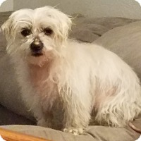 Adopt A Pet :: Lori - Fairview Heights, IL