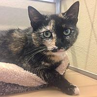 Adopt A Pet :: Polly - Wilmington, DE