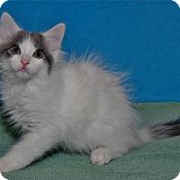 Adopt A Pet :: Zach - Lenexa, KS