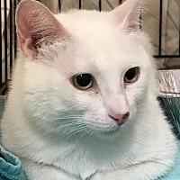 Adopt A Pet :: Paige - Lombard, IL