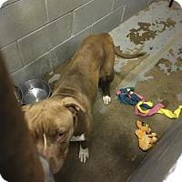 Adopt A Pet :: Reddie - Bedford, IN