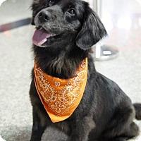 Adopt A Pet :: Mali - Richmond, BC