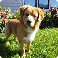 Adopt A Pet :: SAM - McKinleyville, CA