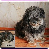 Adopt A Pet :: Marco - Guelph, ON